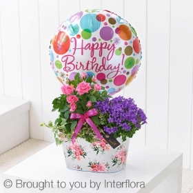 Happy Birthday Summer Planted Tin with Happy Birthday Balloon